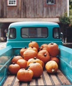Spiced lattes and Saturday trips to the pumpkin patch!